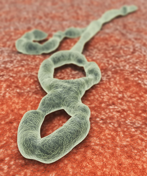 Rendering of a microscope image of Ebola virus.