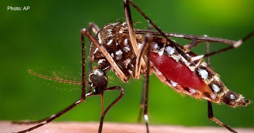 Aedes_aegypti_mos_3553076b_1200x627